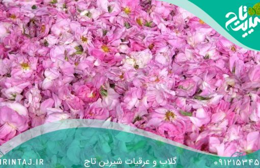 گلاب-کاشان